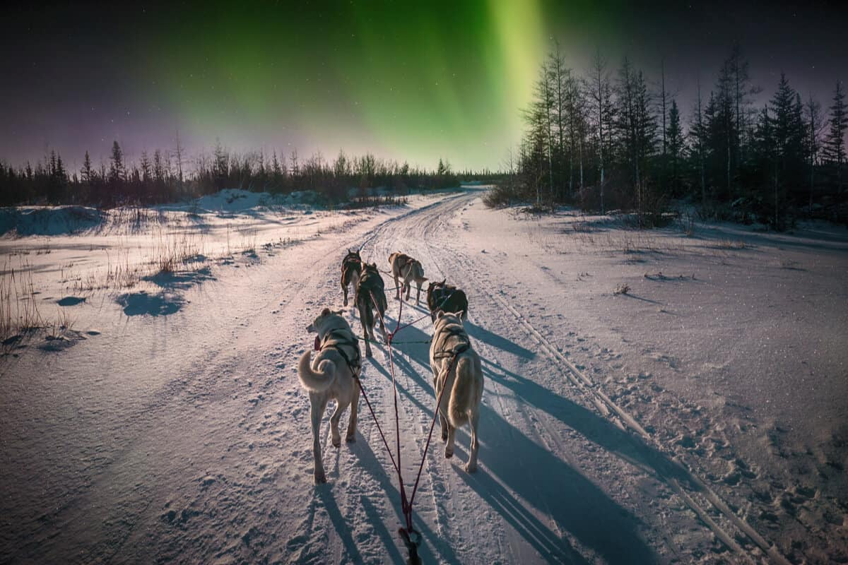 Dog sledding Iceland Northern Lights
