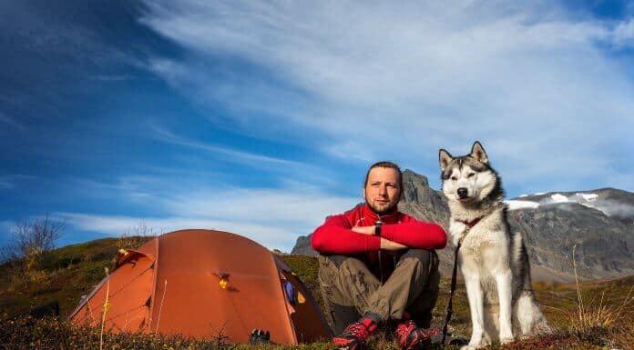 Pet Friendly Iceland Campsites