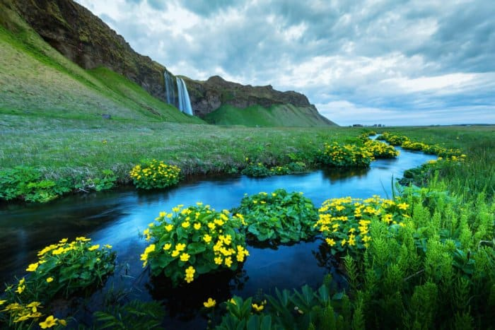 landscape blooming due to Iceland Weather in August
