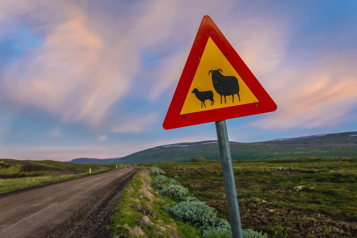 Icelandic sheep warning road sign