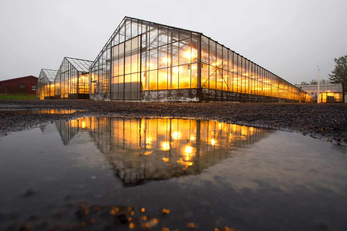 One of Iceland's major towns and cities is Hveragerdi with its greenhouse